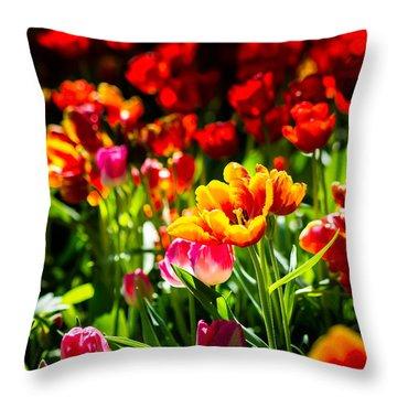 Throw Pillow featuring the photograph Tulip Flower Beauty by Alexander Senin