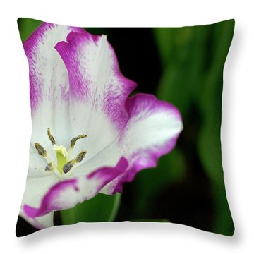 Throw Pillow featuring the photograph Tulip Flower by Pradeep Raja Prints