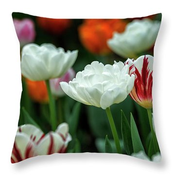 Throw Pillow featuring the photograph Tulip Flowers by Pradeep Raja Prints