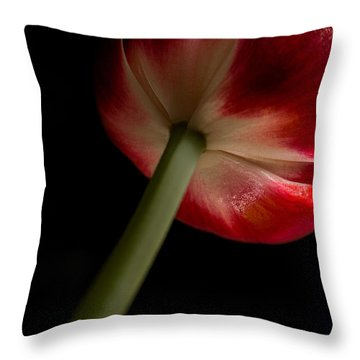 Tulip In Window Light Throw Pillow