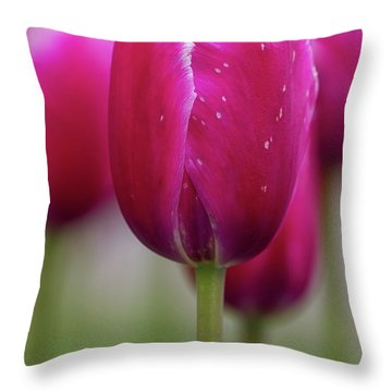 Throw Pillow featuring the photograph Tulip Time 22 by Heather Kenward