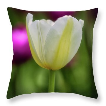 Tulip Time 44 Throw Pillow