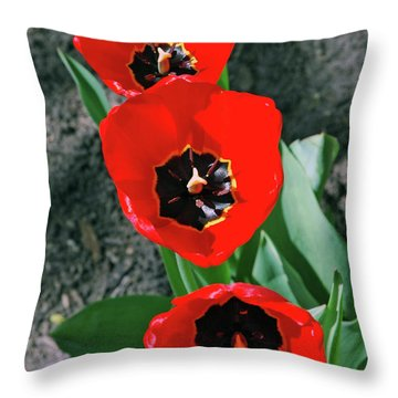 Throw Pillow featuring the photograph Tulip Trio by LeeAnn McLaneGoetz McLaneGoetzStudioLLCcom