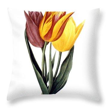 Tulip (tulipa Gesneriana) Throw Pillow by Granger