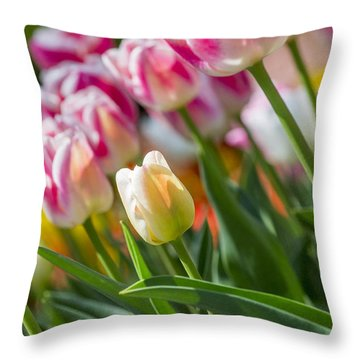 Throw Pillow featuring the photograph Tulips by Angela DeFrias