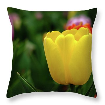 Tulips At Campus Throw Pillow