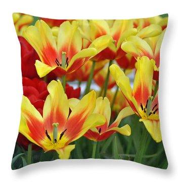 Tulips Glorious Tulip Monsella Throw Pillow by Debra  Miller