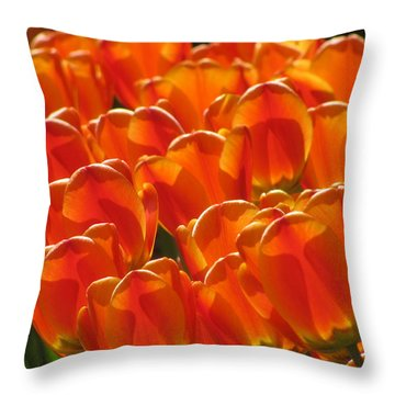 Tulips In Light Throw Pillow by Alfred Ng