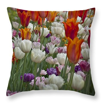 Tulips... Tulips... Everywhere Throw Pillow