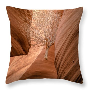 Tumbleweed In Owl Canyon Throw Pillow