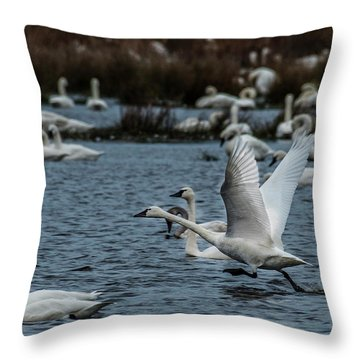 Tundra Swan And Liftoff Head Start Throw Pillow