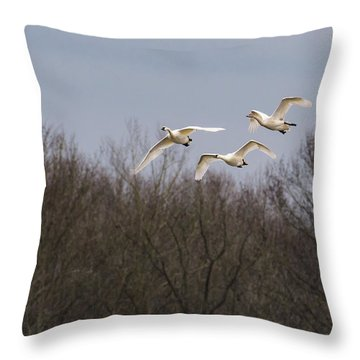 Tundra Swan Trio Throw Pillow