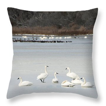 Tundra Swans 1 Throw Pillow