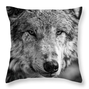 Tundra Wolf Throw Pillow