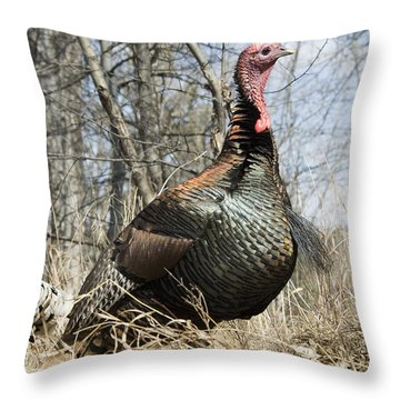 Turkey Tom Throw Pillow