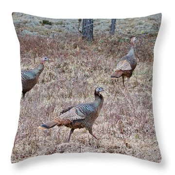 Turkey Trio 1153 Throw Pillow by Michael Peychich