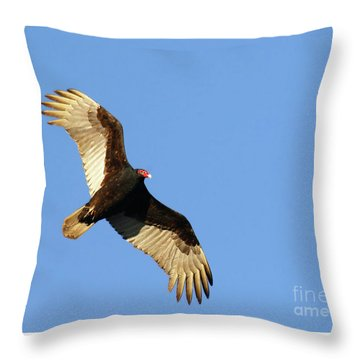 Turkey Vulture Throw Pillow by Debbie Stahre