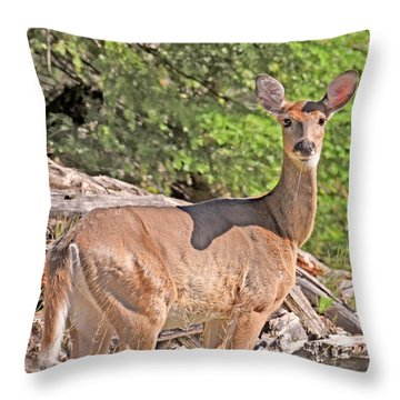 Throw Pillow featuring the photograph Turn Coat by Sally Sperry