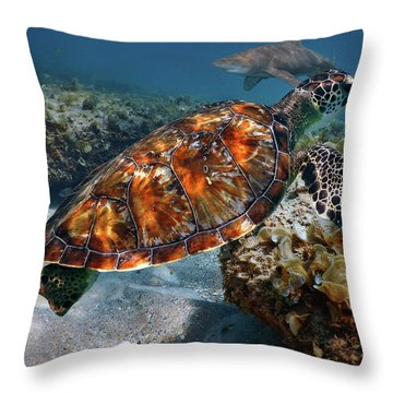 Turtle And Shark Swimming At Ocean Reef Park On Singer Island Florida Throw Pillow by Justin Kelefas