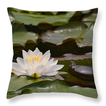 Turtle And Water Lily Throw Pillow by Kathleen Stephens