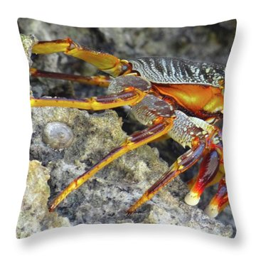 Turtle Bay Resort Watamu Kenya Rock Crab Throw Pillow
