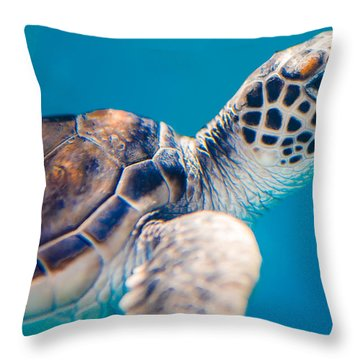 Turtle Town Throw Pillow