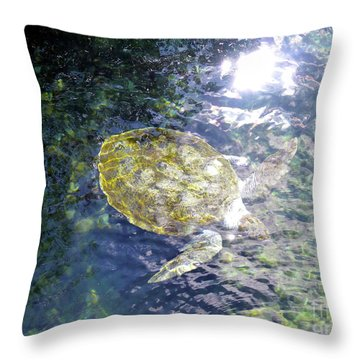 Throw Pillow featuring the photograph Turtle Water Glide by Francesca Mackenney