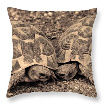 Throw Pillow featuring the photograph Turtles Pair by Gina Dsgn