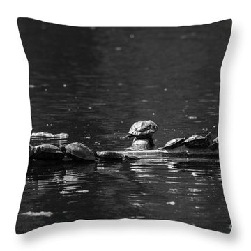 Turtles Sunning Throw Pillow