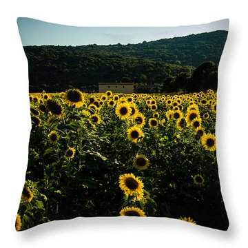 Tuscany - Sunflowers At Sunset Throw Pillow by Cesare Bargiggia