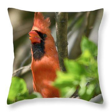 Tweeting Throw Pillow