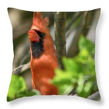Tweeting Throw Pillow