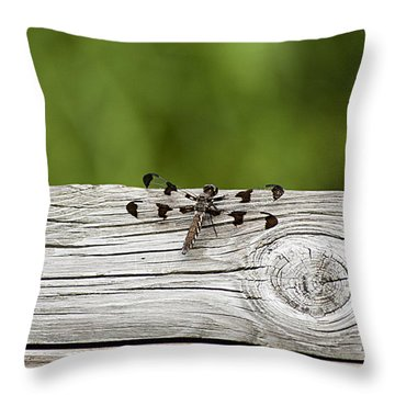 Twelve Spotted-skimmer 20120703_213a Throw Pillow by Tina Hopkins