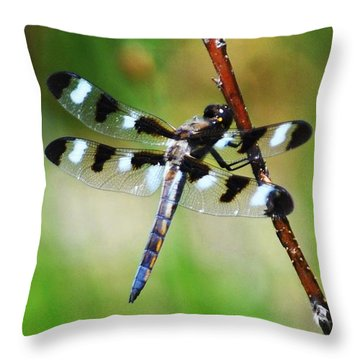 Throw Pillow featuring the photograph Twelve Spotted Skimmer by Rodney Campbell