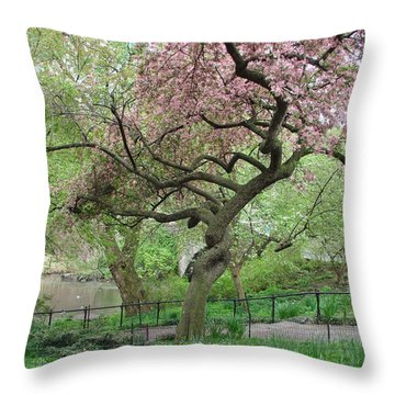 Twisted Cherry Tree In Central Park Throw Pillow by Margaret Bobb