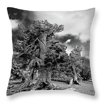Twisted Old Bristlecone Pine Above Crater Lake - Oregon Throw Pillow by Christine Till