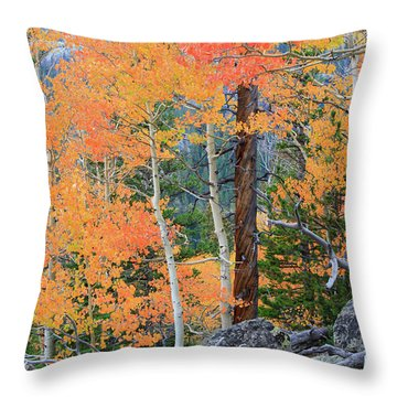 Throw Pillow featuring the photograph Twisted Pine by David Chandler