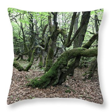 Throw Pillow featuring the photograph Twisted Trunks Of Beech Trees - Old Beech Forest by Michal Boubin