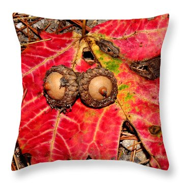 Two Acorns On Tatterd Maple Leaf Throw Pillow by Robert Morin