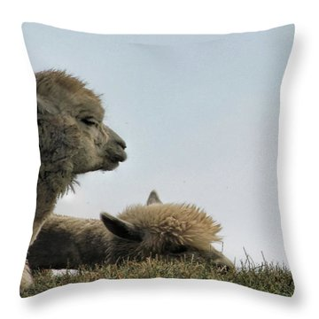 Two Alpaca Throw Pillow by Pat Cook