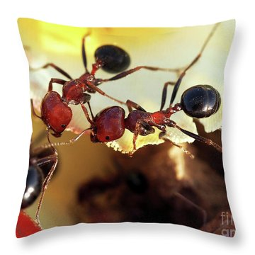 Two Ants In Sunny Day Throw Pillow