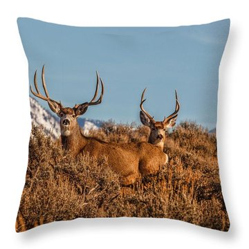 Two Bucks Glory Throw Pillow