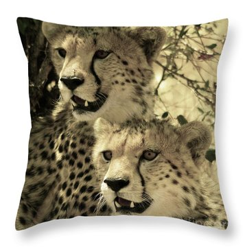 Two Cheetahs Throw Pillow