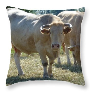 Throw Pillow featuring the photograph Two Cows by Jean Bernard Roussilhe