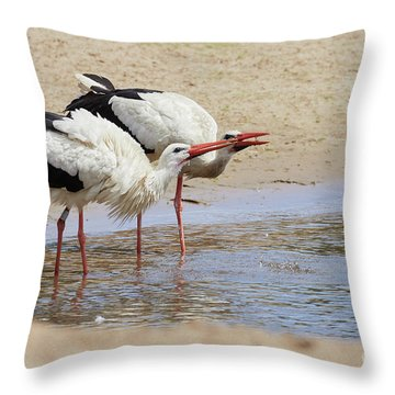Throw Pillow featuring the photograph Two Drinking White Storks by Nick Biemans