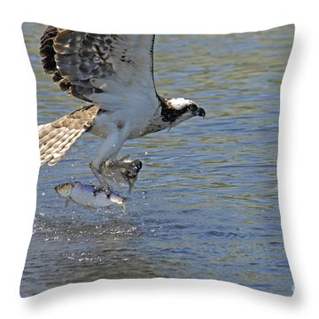 Throw Pillow featuring the photograph Two Fish by Alana Ranney