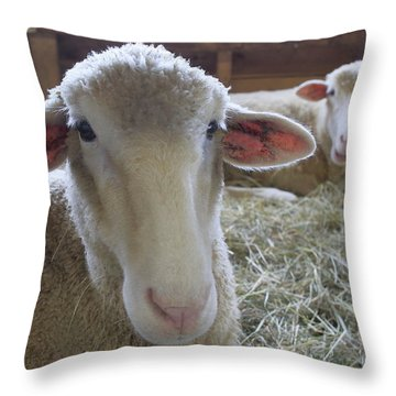 Two Funny Sheep In A Barn Throw Pillow