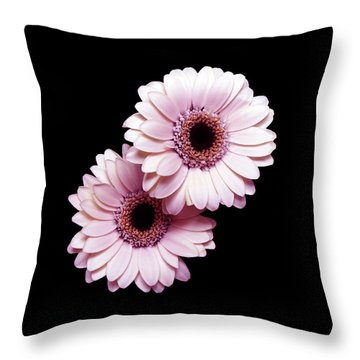 Two Gerberas On Black Throw Pillow