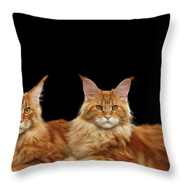 Two Ginger Maine Coon Cat On Black Throw Pillow