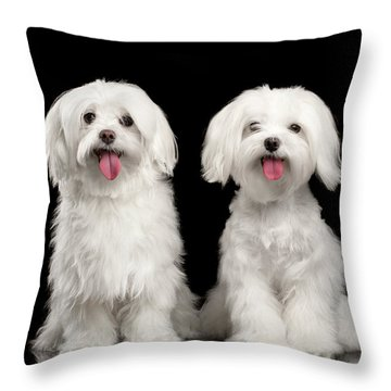 Two Happy White Maltese Dogs Sitting, Looking In Camera Isolated Throw Pillow